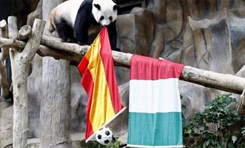 oso_panda_mundial