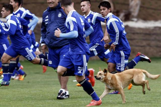 argentina_perro_entrenamiento